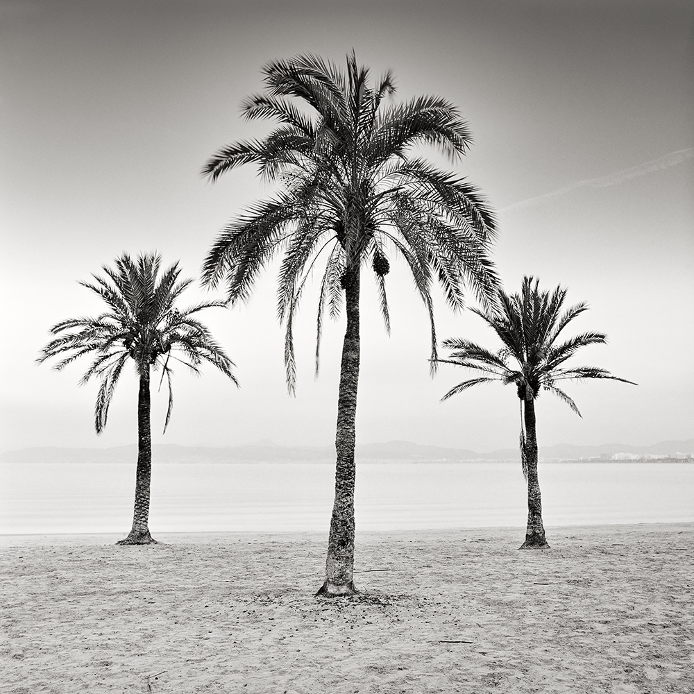 Three_Palm_Trees-Mallorca-2017