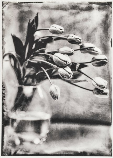 """Kollodium Nassplatte """"Tulpen"""" Edition"""